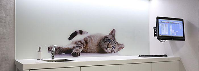 Glasbild für ein Haustier Katze