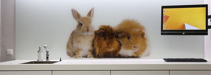 Glasbild fürs Tier: 3 Kaninchen